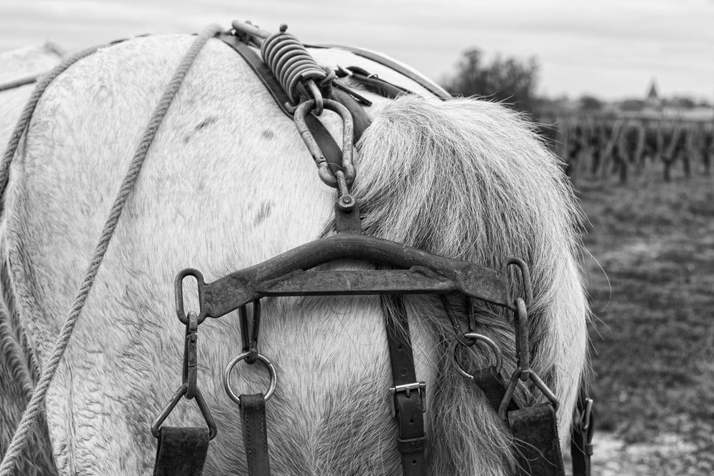 1ttp_jean_faure_cheval_5892_edit