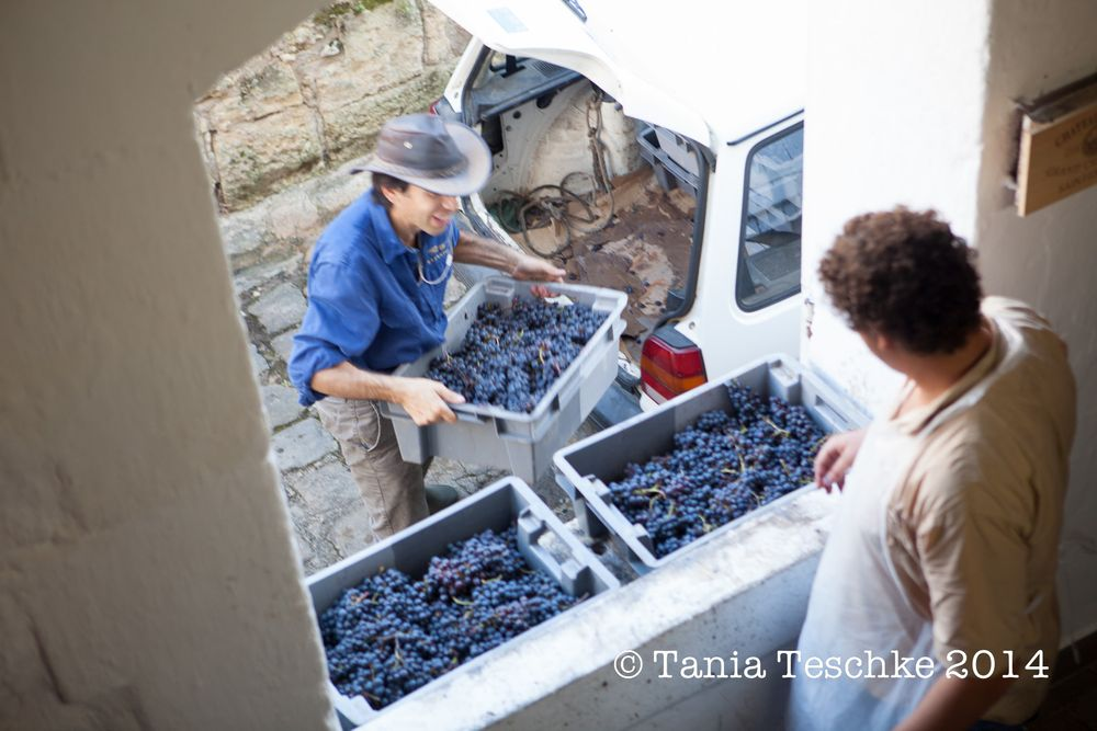1tania_teschkee_photography_chateau_guadet_vendanges_2014_day_1_8891