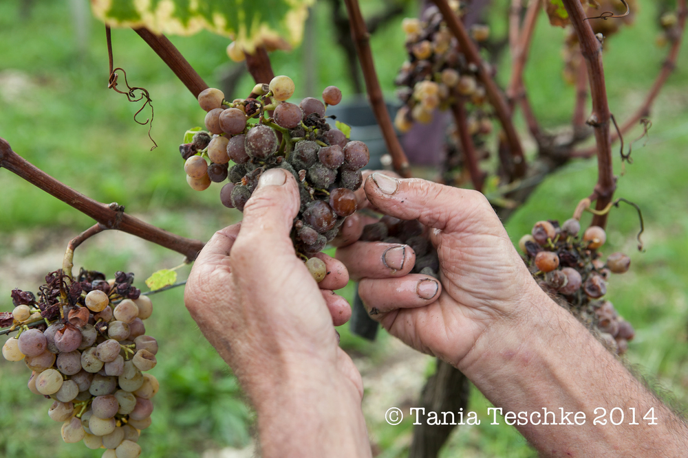 1tania_teschkee_photography_biac_sweet_vendanges_9438