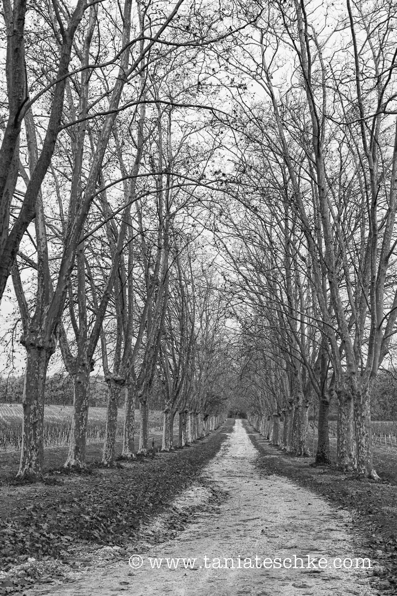 1carbonnieux_pruning_1410_edit