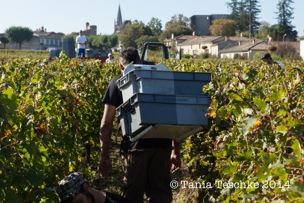 1tania_teschkee_photography_chateau_guadet_vendanges_2014_day_1_8779