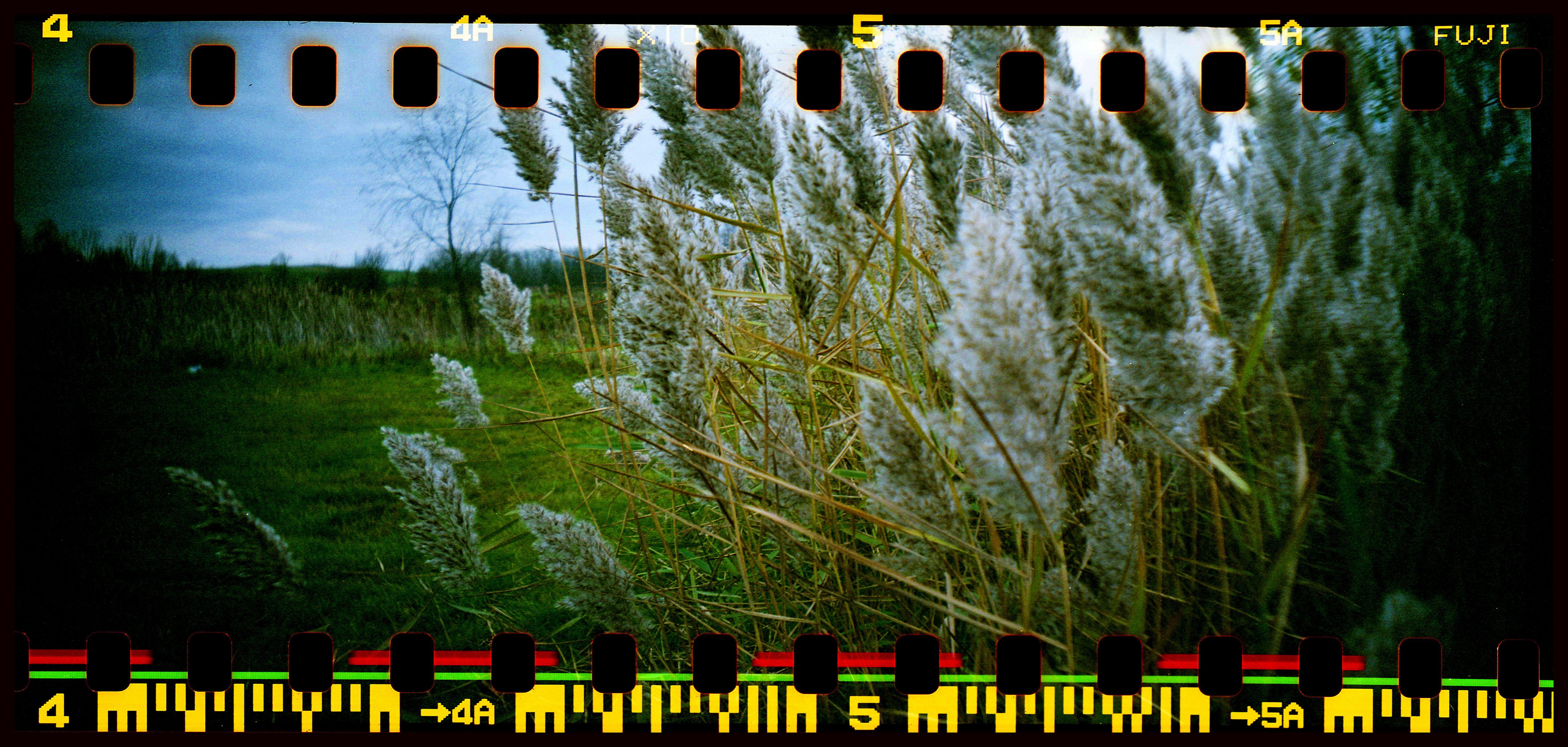 Midwestern Foliage, Fort Wayne, IN