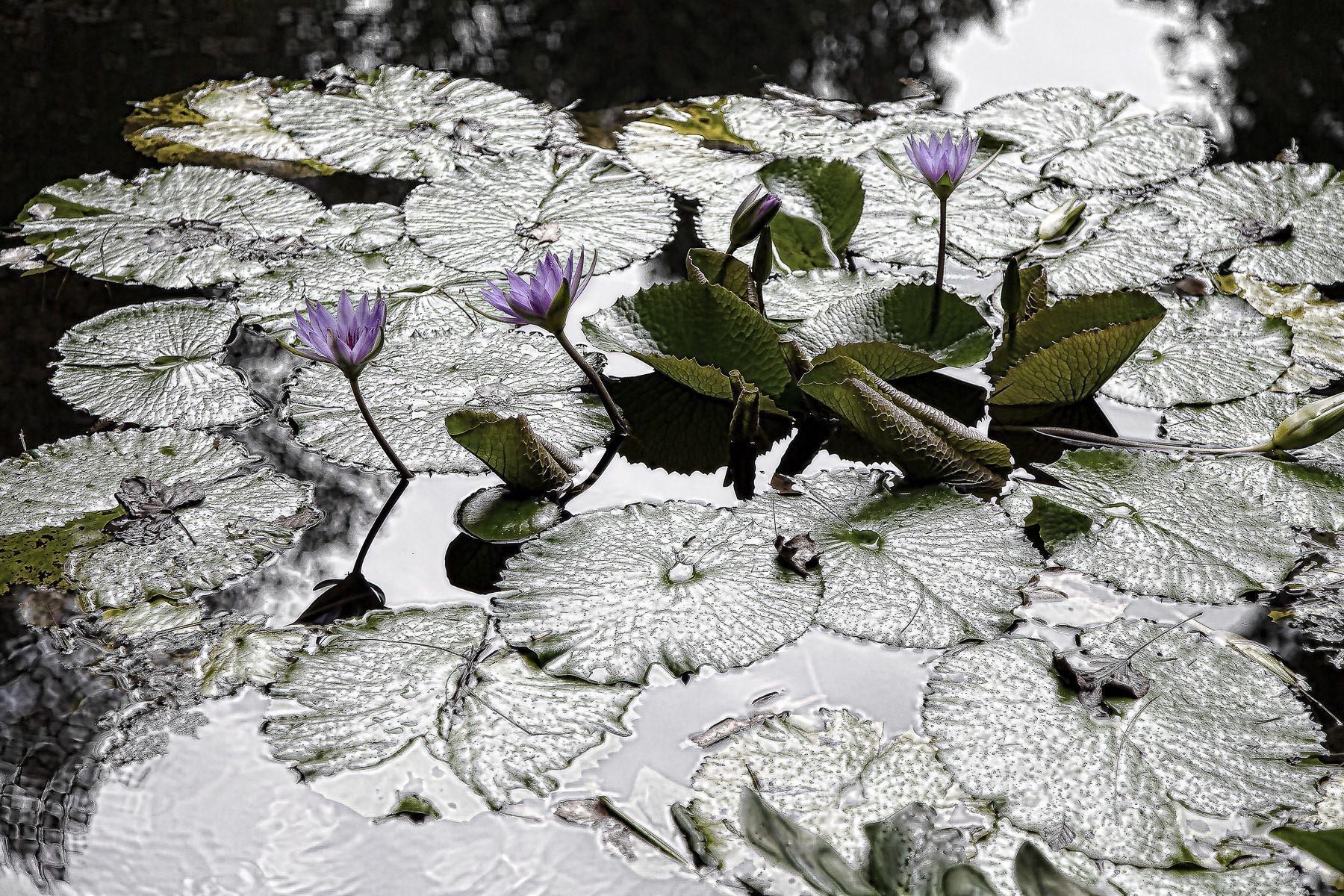 1gibbs_gardens_31.jpg