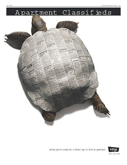 1Viva_Com_Turtle.jpg