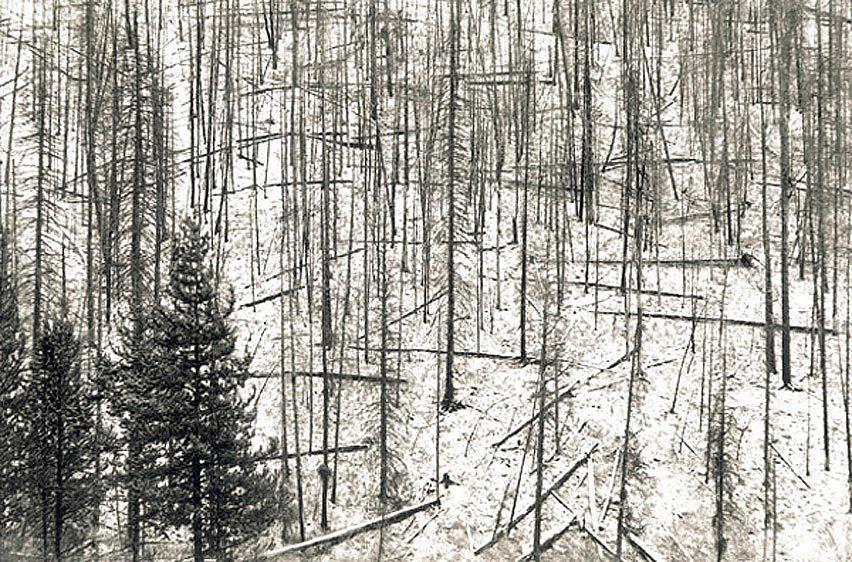 1r3_trees.jpg