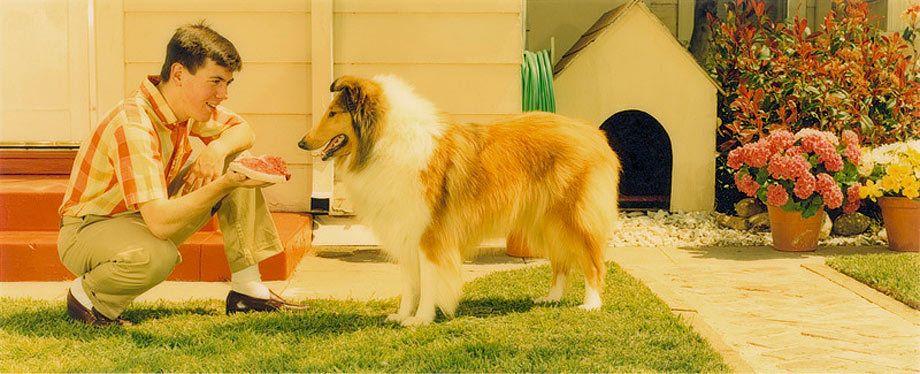 1KROQ_boy_dog.jpg