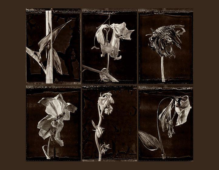 1r6_dead_flowers