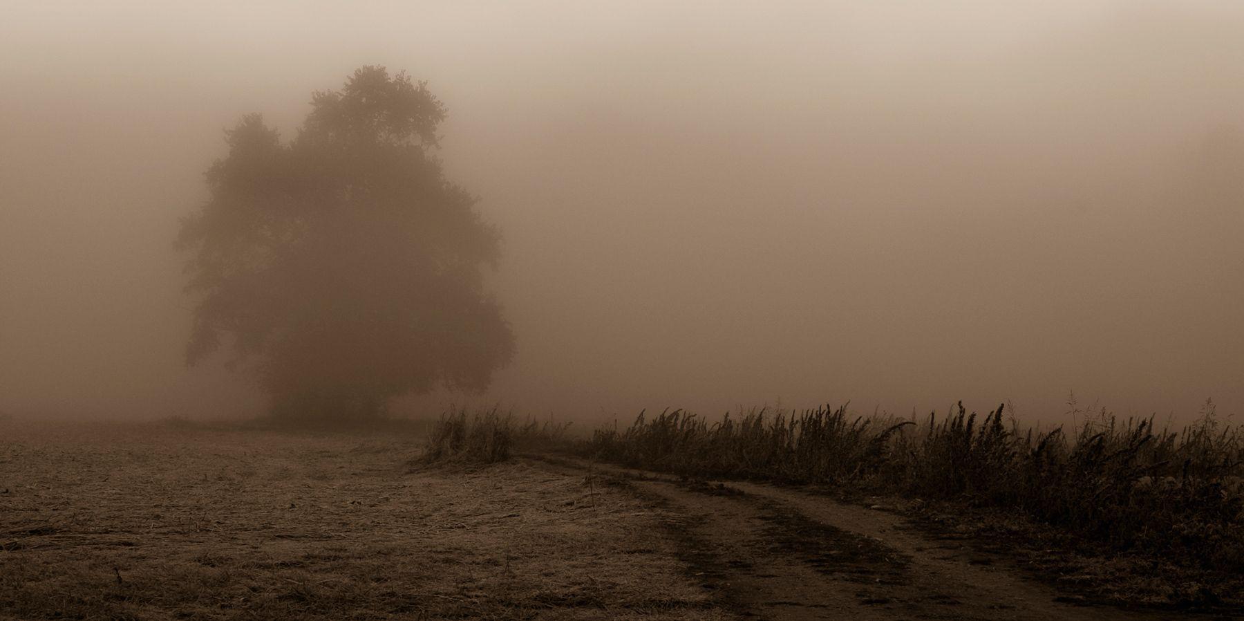 1lone_tree_foggy_field.jpg