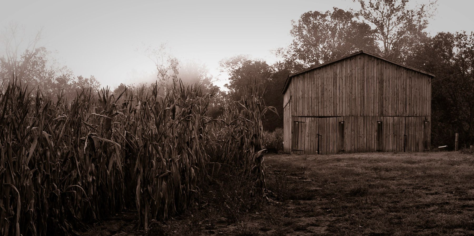 1corn_field_with_barn.jpg