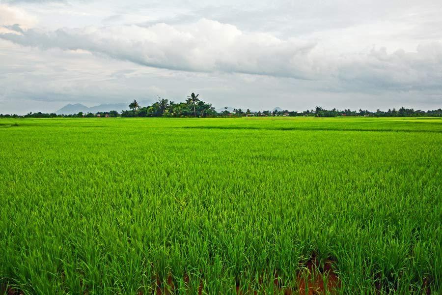 Camarines Norte, Luzon