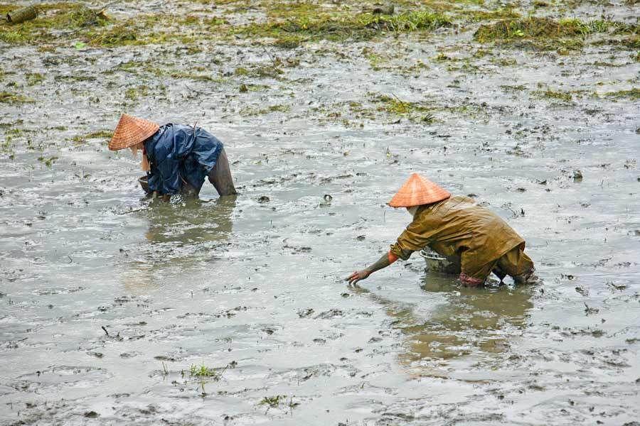1MSM_Vietnam_l_317a