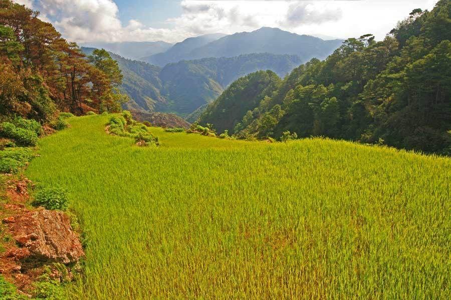 Sagada Rice Terraces, Mountain Province