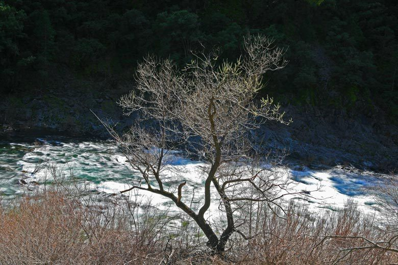 1american_and_yuba_rivers_086aw