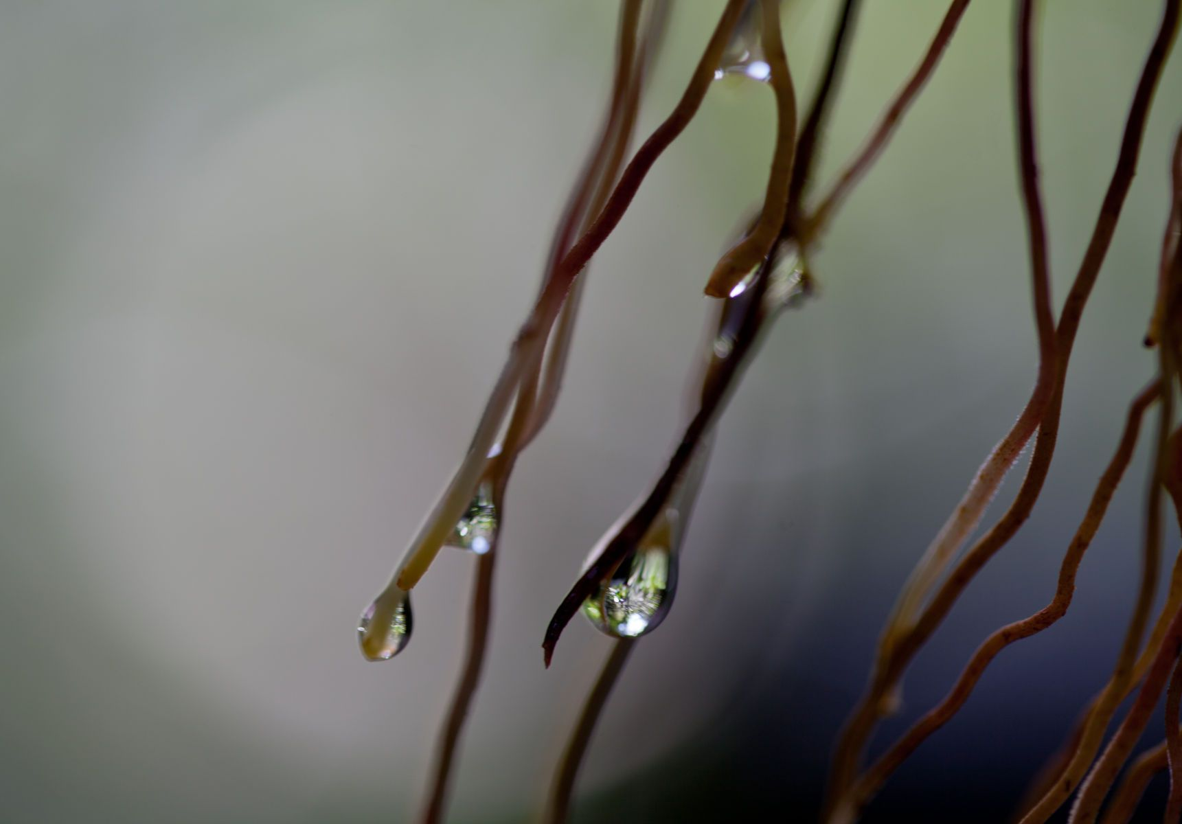 CONSIDER THE DEWDROP