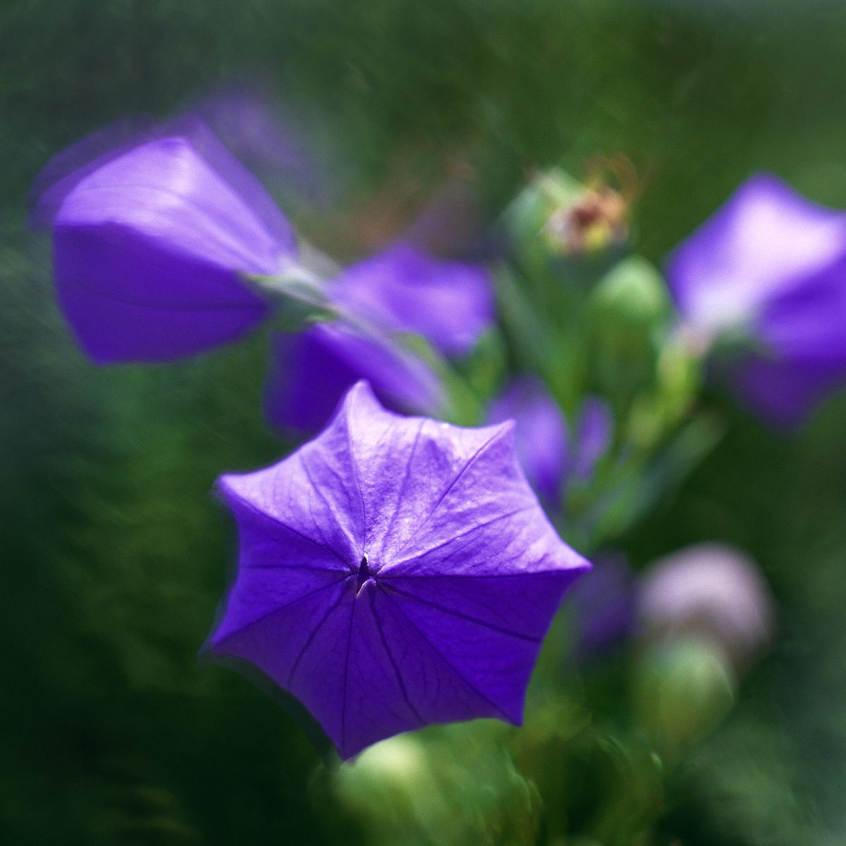 1purple_flowers.jpg