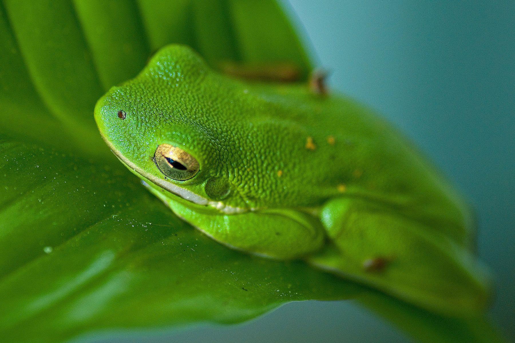 1treefrog.jpg