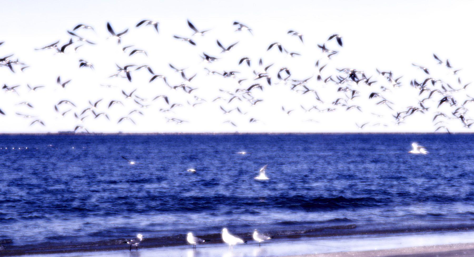 1seagulls.jpg