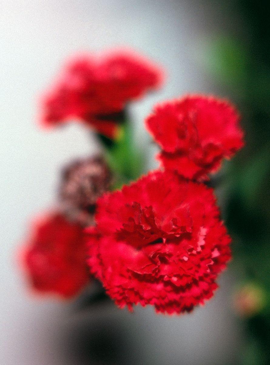 1red_flowers.jpg