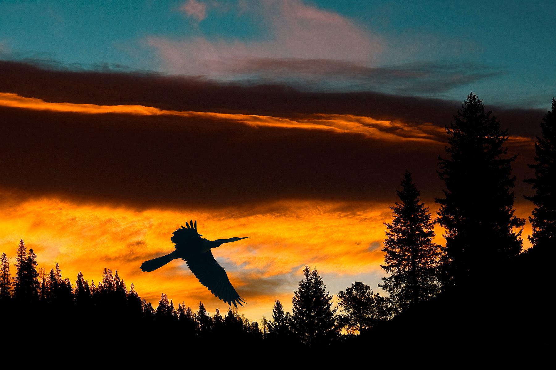 1crane_sunrise.jpg