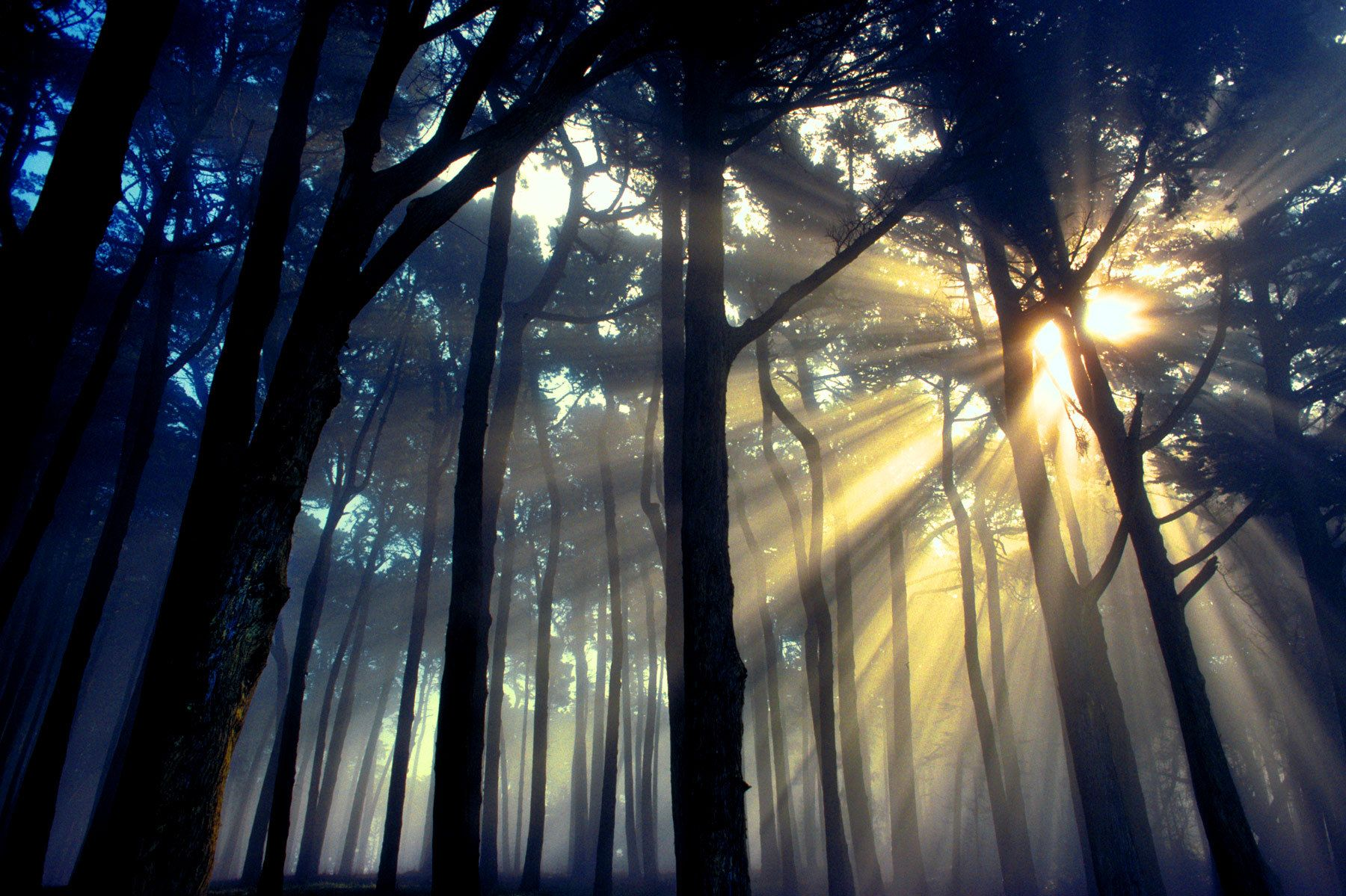 1presidiowoods.jpg