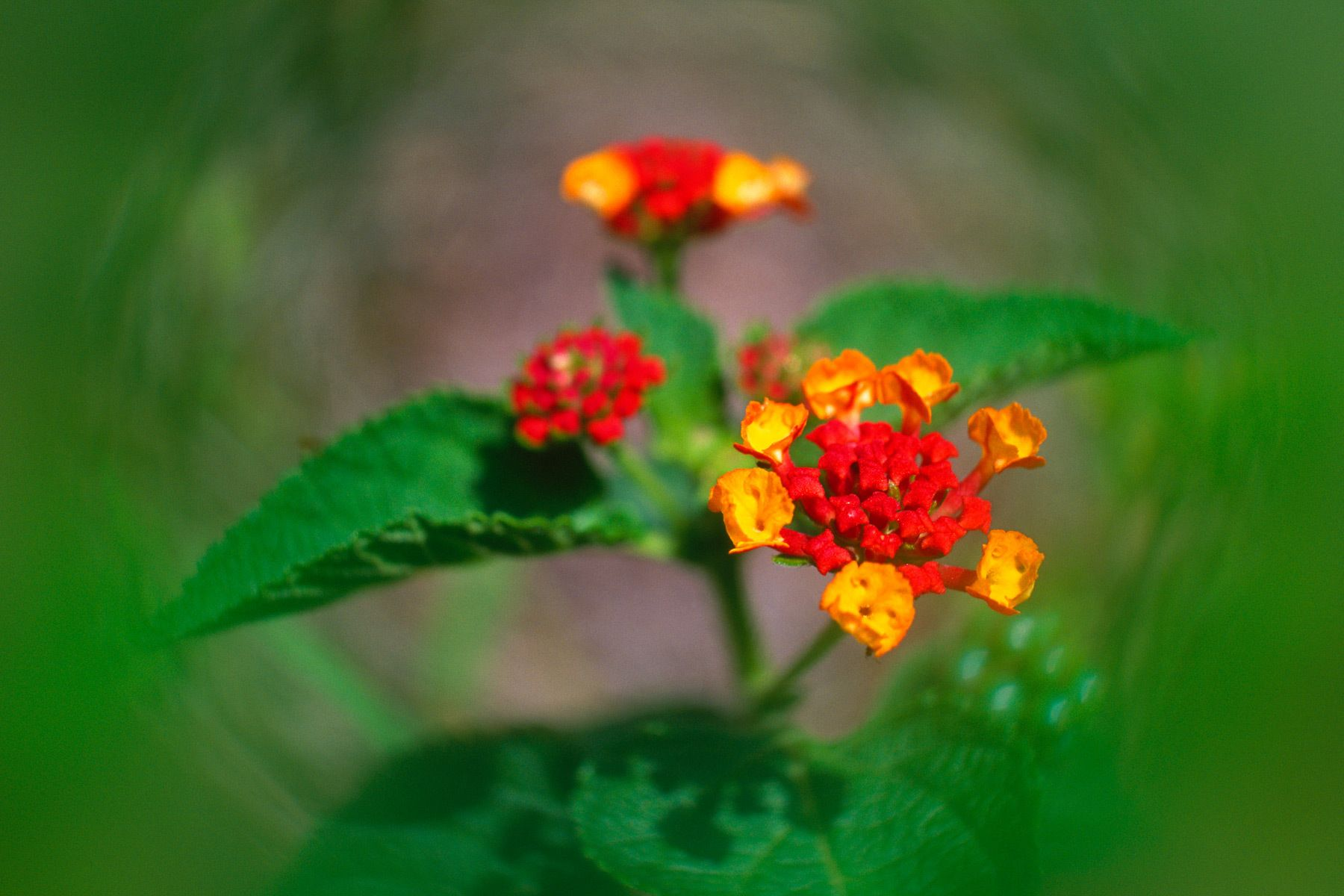 1blurred_flowers.jpg