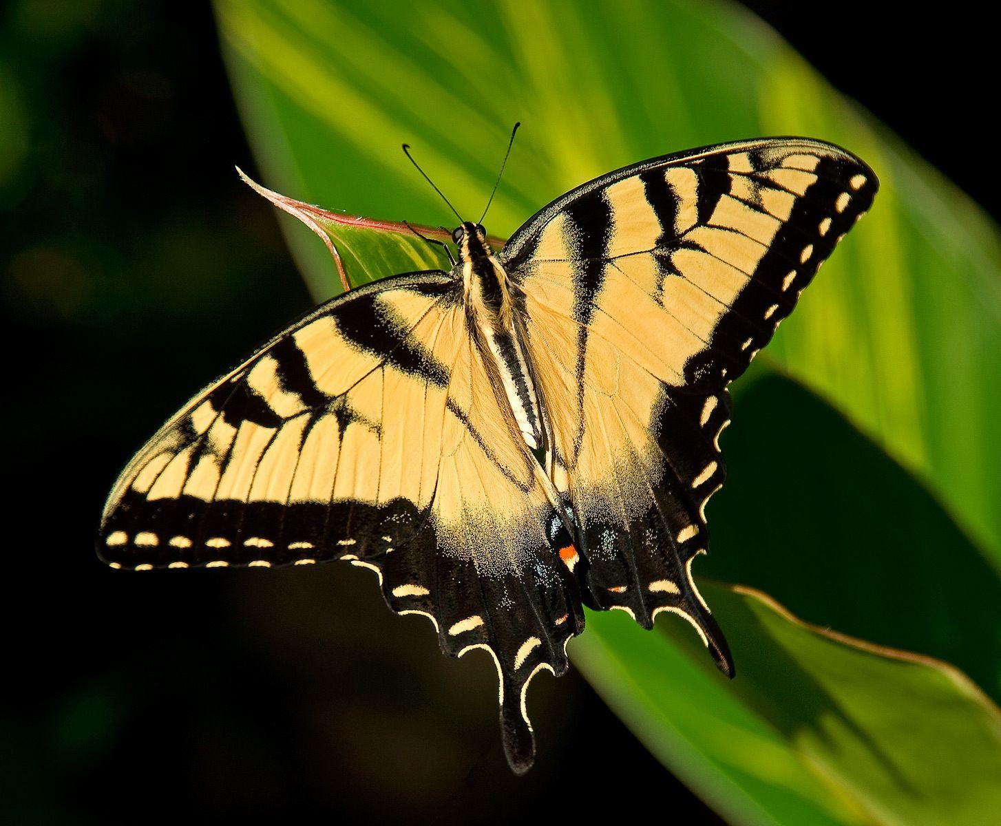 1butterfly.jpg