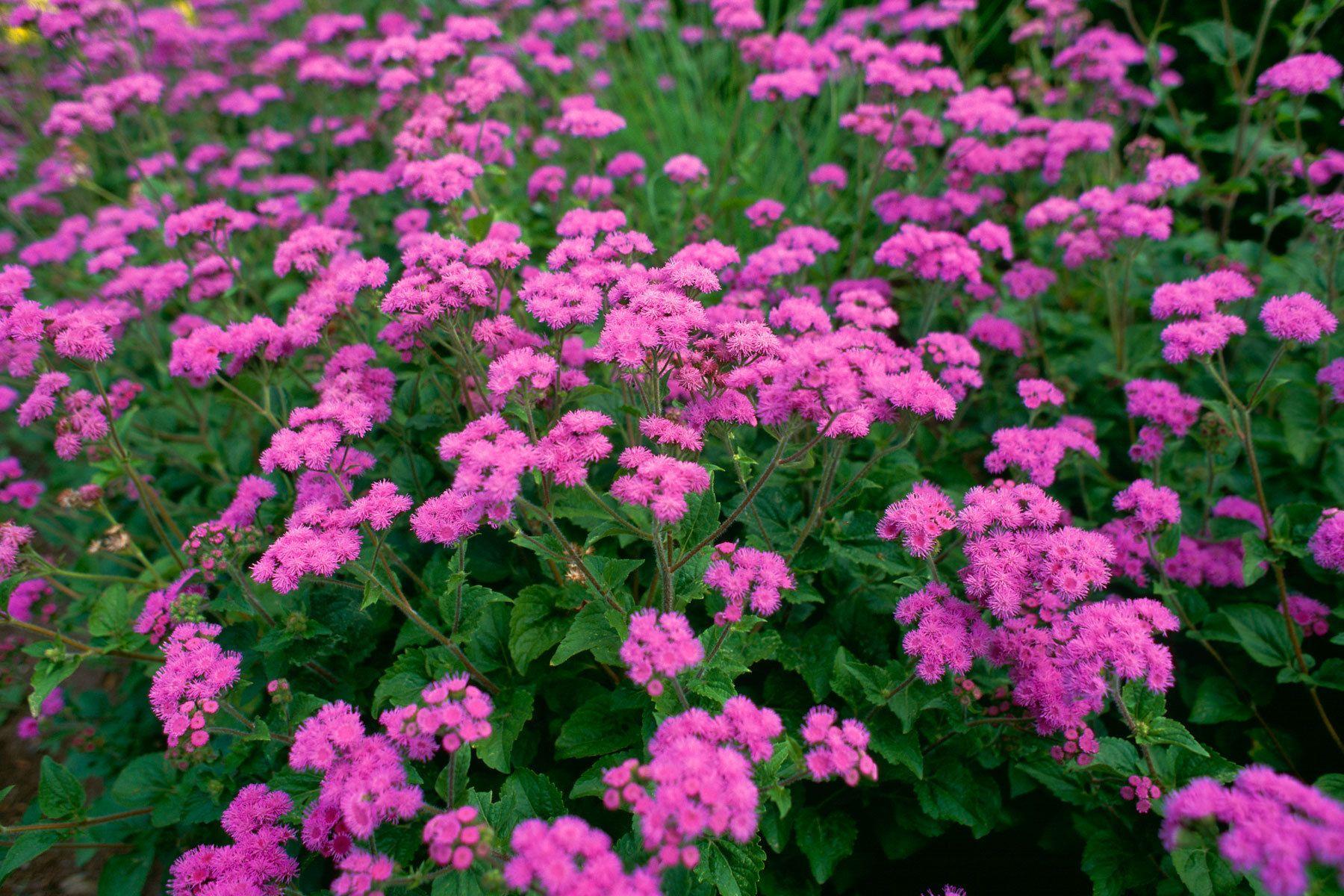 1pinkpurple_flowers.jpg
