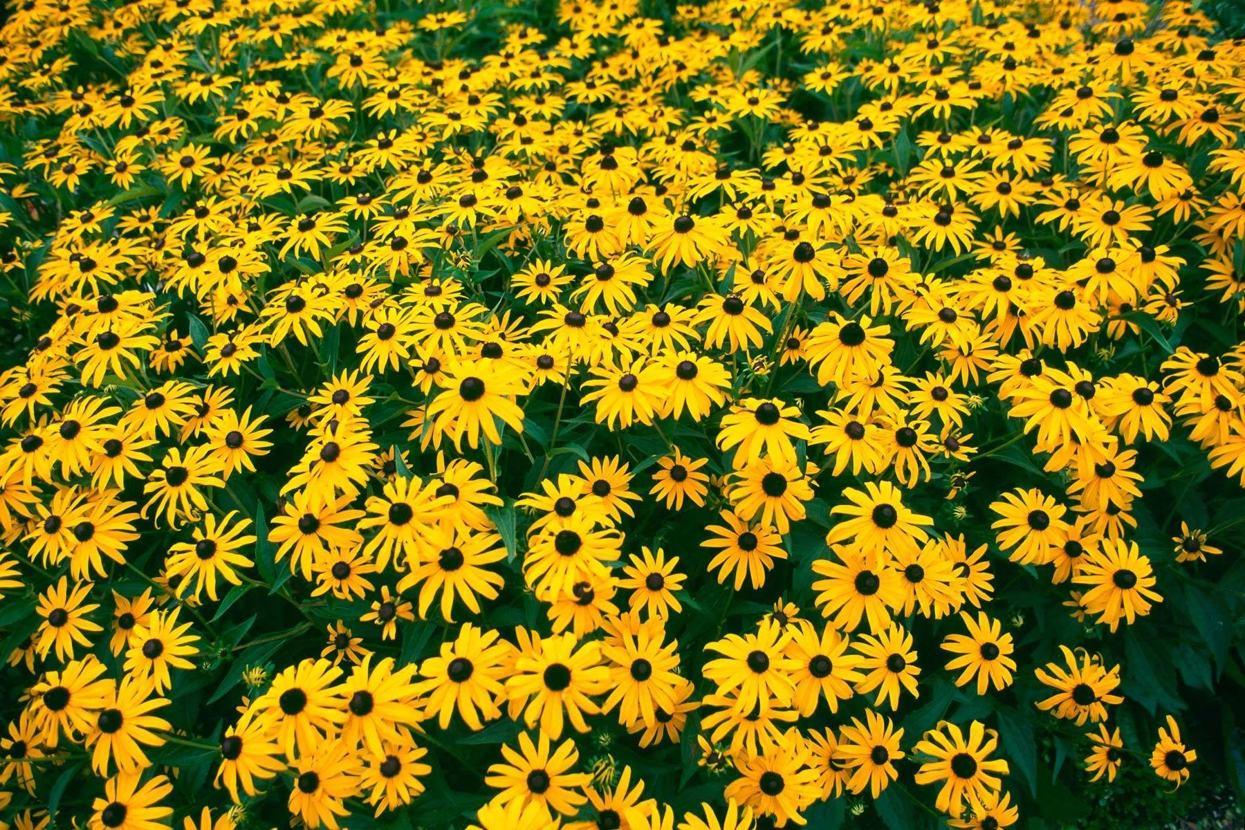 1yellow_flowers.jpg