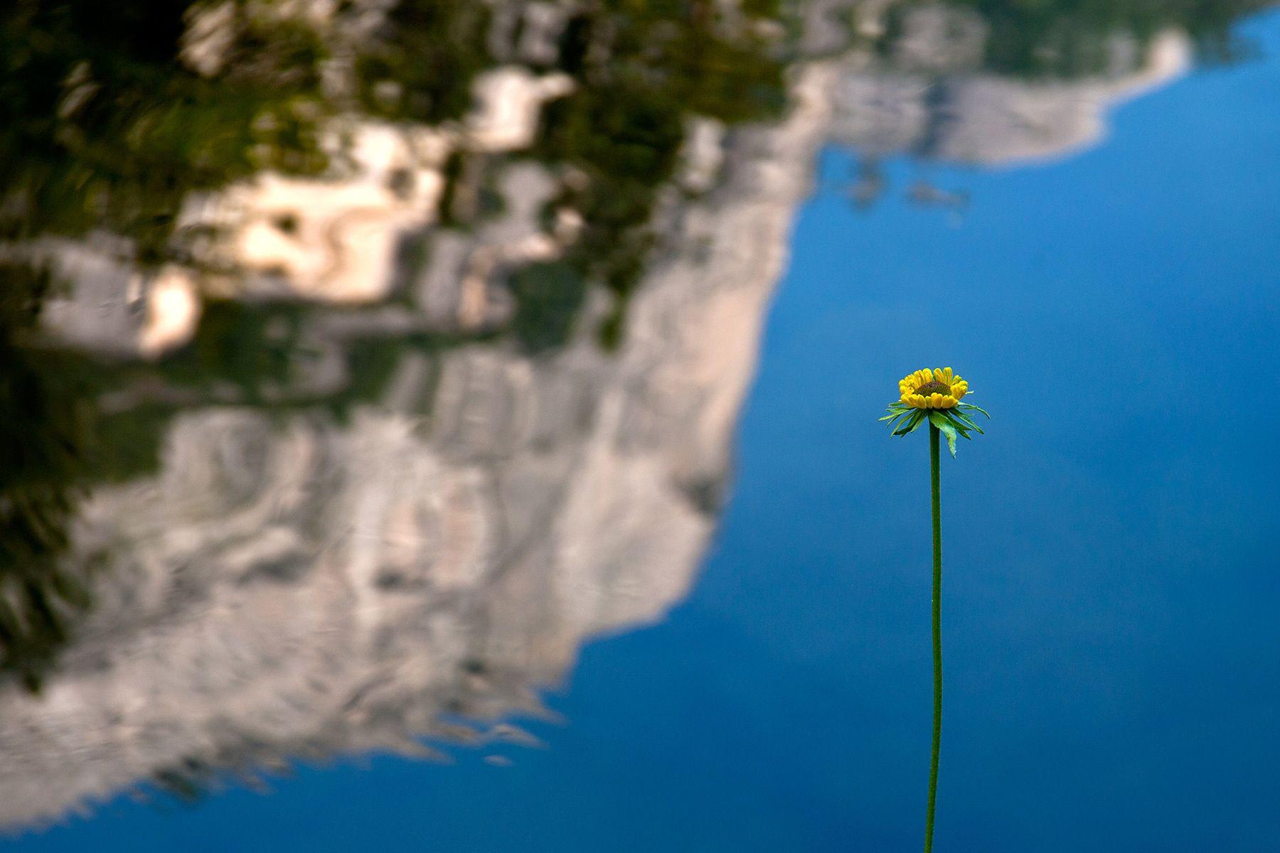 1elcap_loneflower.jpg
