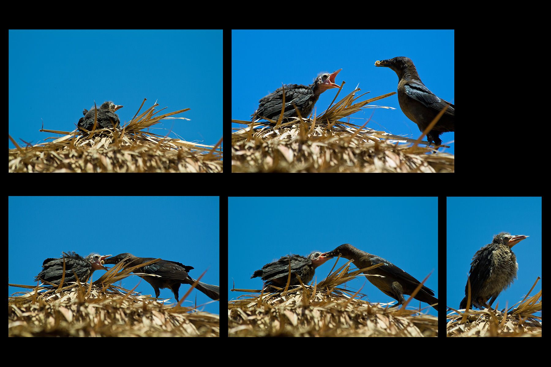 1birdfeed_sequence.jpg