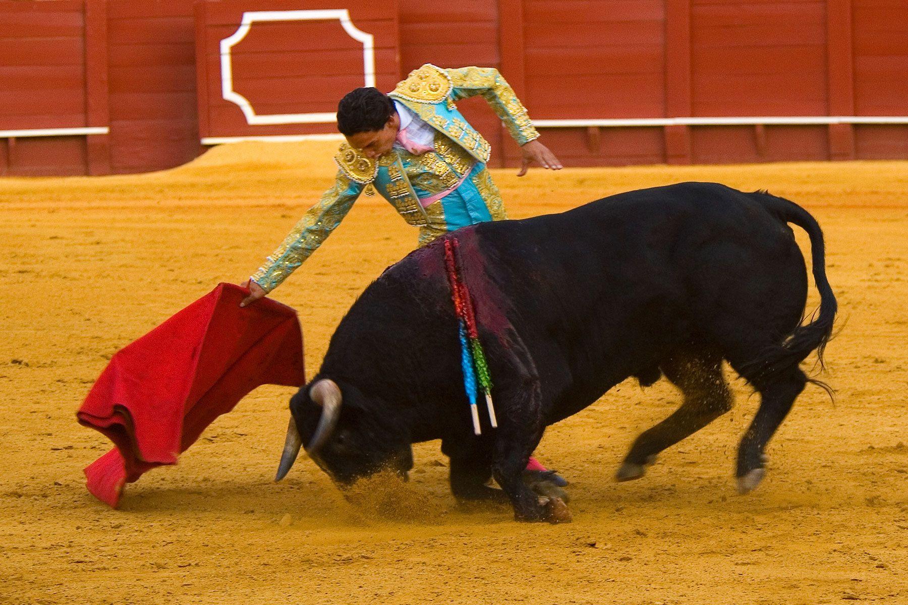 1bullfighter_3.jpg