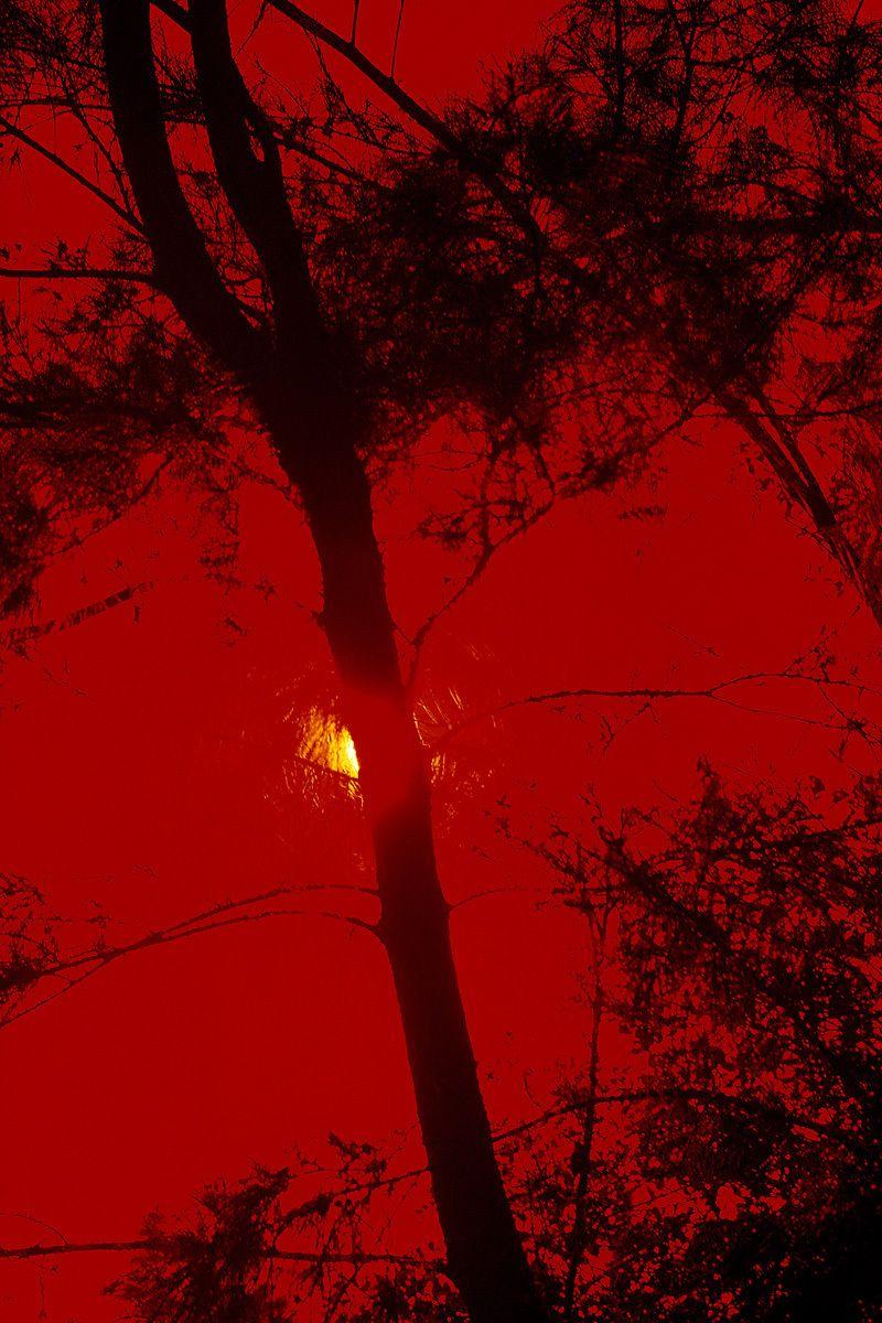 1red_tree.jpg