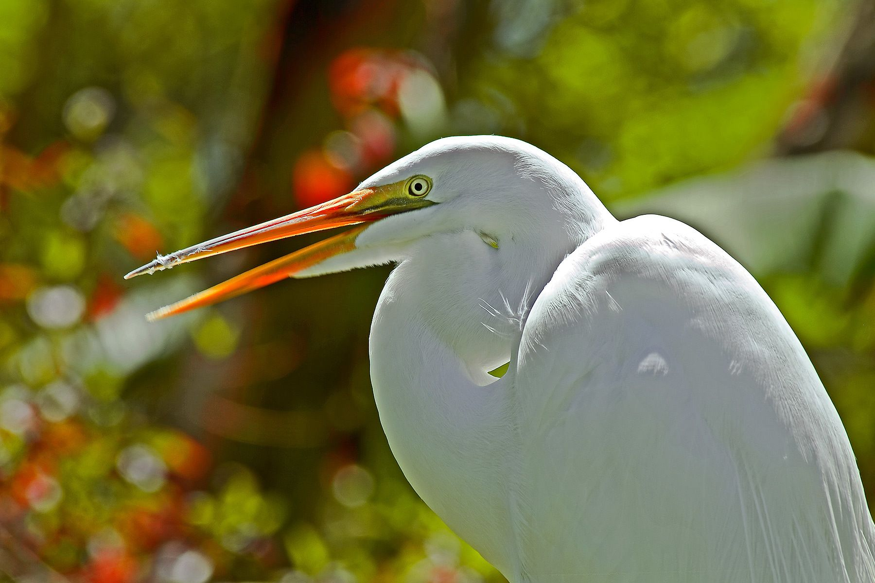1greategret.jpg