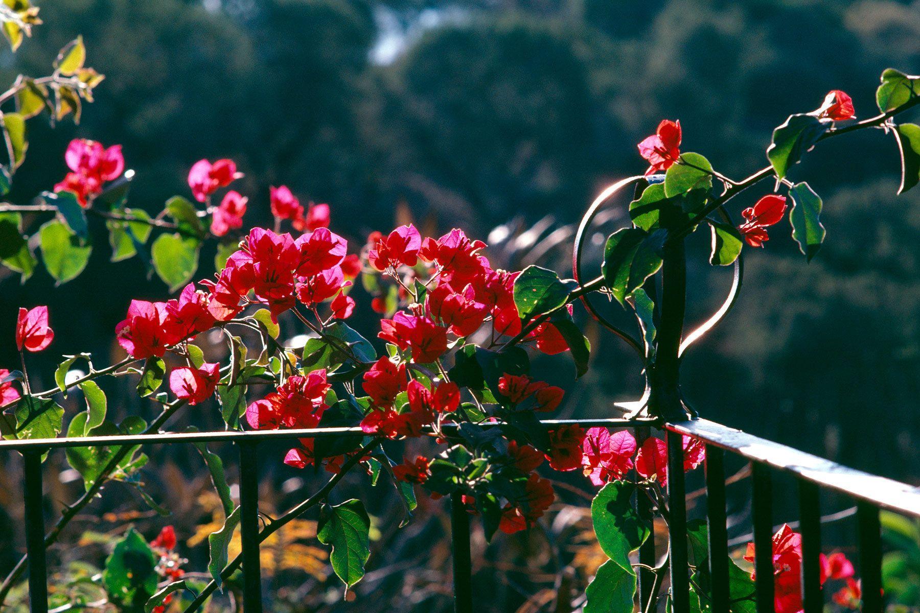 1red_flowers_2.jpg