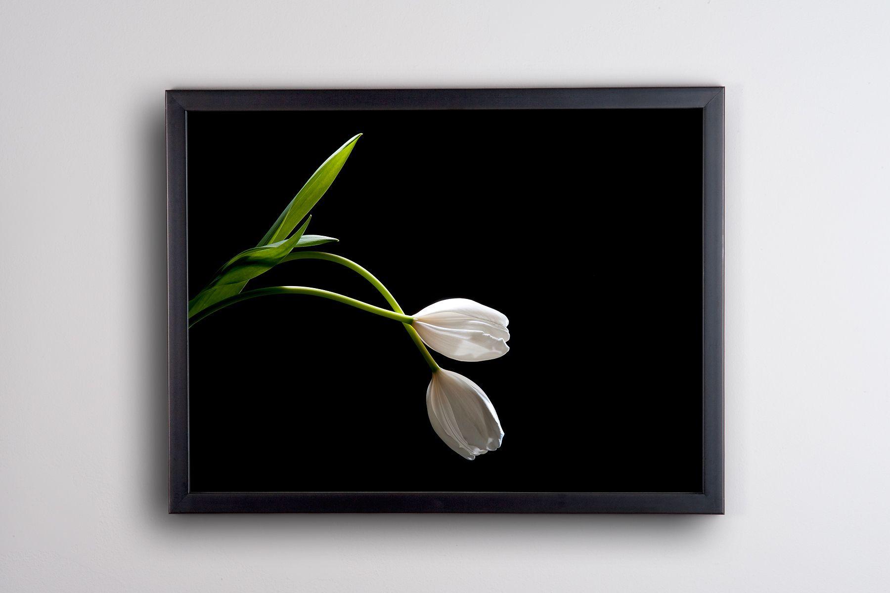 1r18x24_tulip.jpg