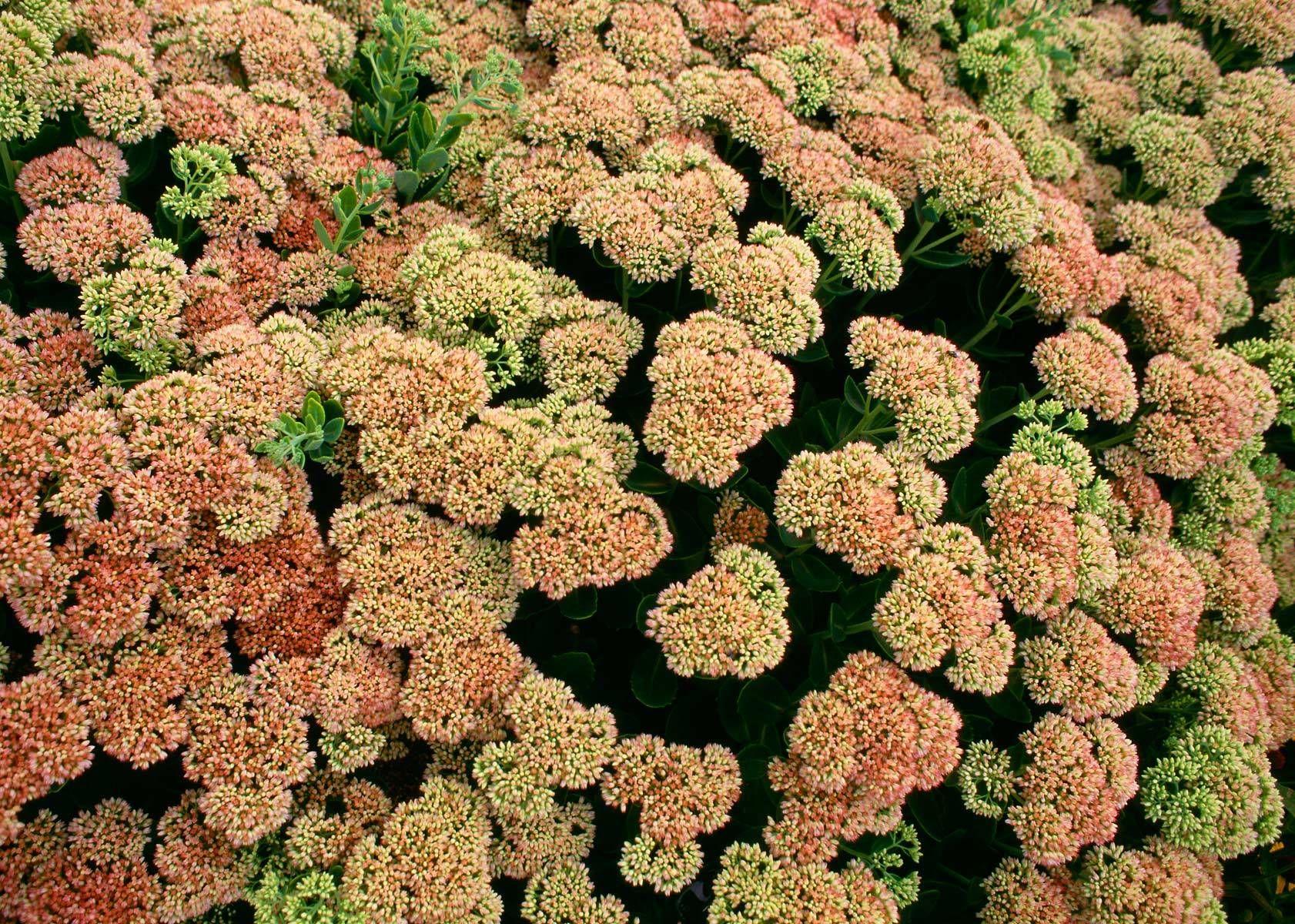 1lightpink_flowers.jpg