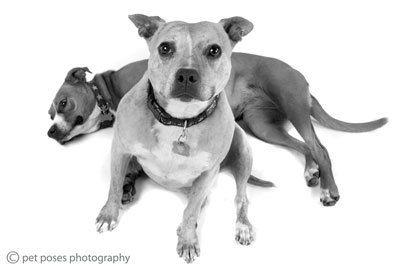 1Kit_s_Dogs_035.jpg