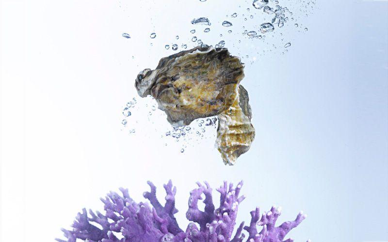 oysters coral kiyoshi togashi