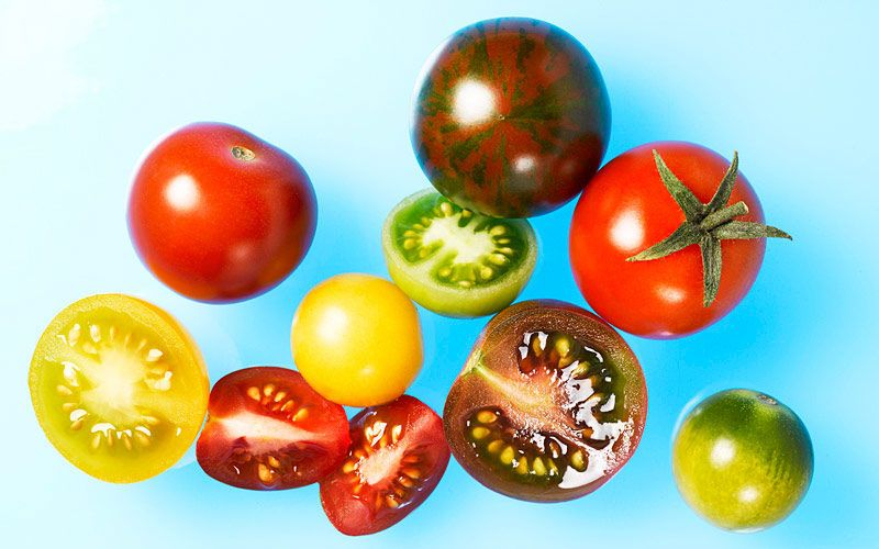 cherry tomatoes kiyoshi togashi