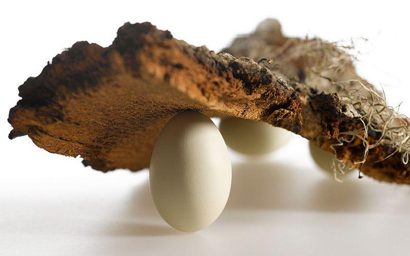 bark eggs kiyoshi togashi