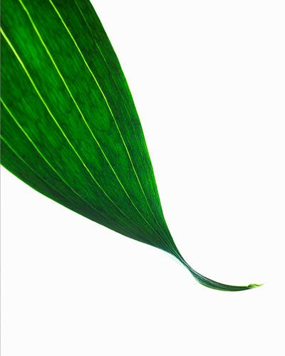 green leaf with water droplet kiyoshi togashi