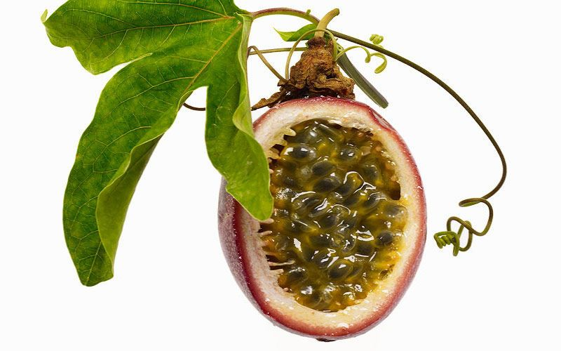 passion fruit with leaf kiyoshi togashi