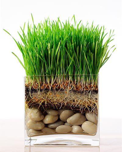 botanicals grass roots stones kiyoshi togashi