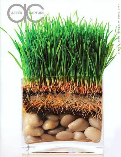 grass roots stones kiyoshi togashi