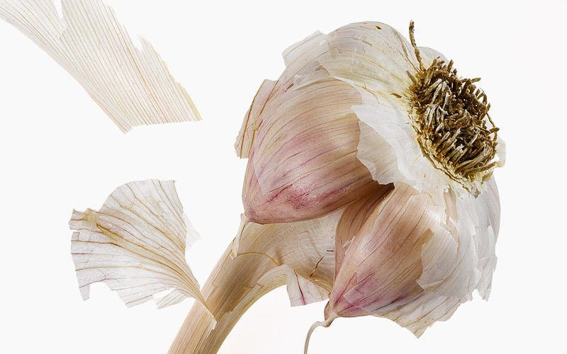 garlic kiyoshi togashi