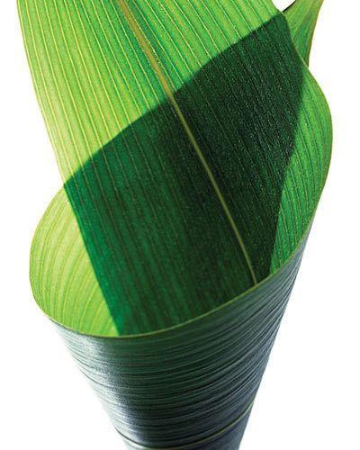 wrapped bamboo leaf kiyoshi togashi