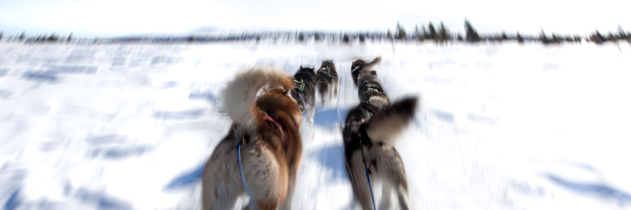 Dogsled . wide