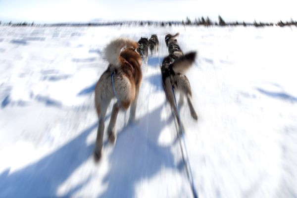 Dogsled