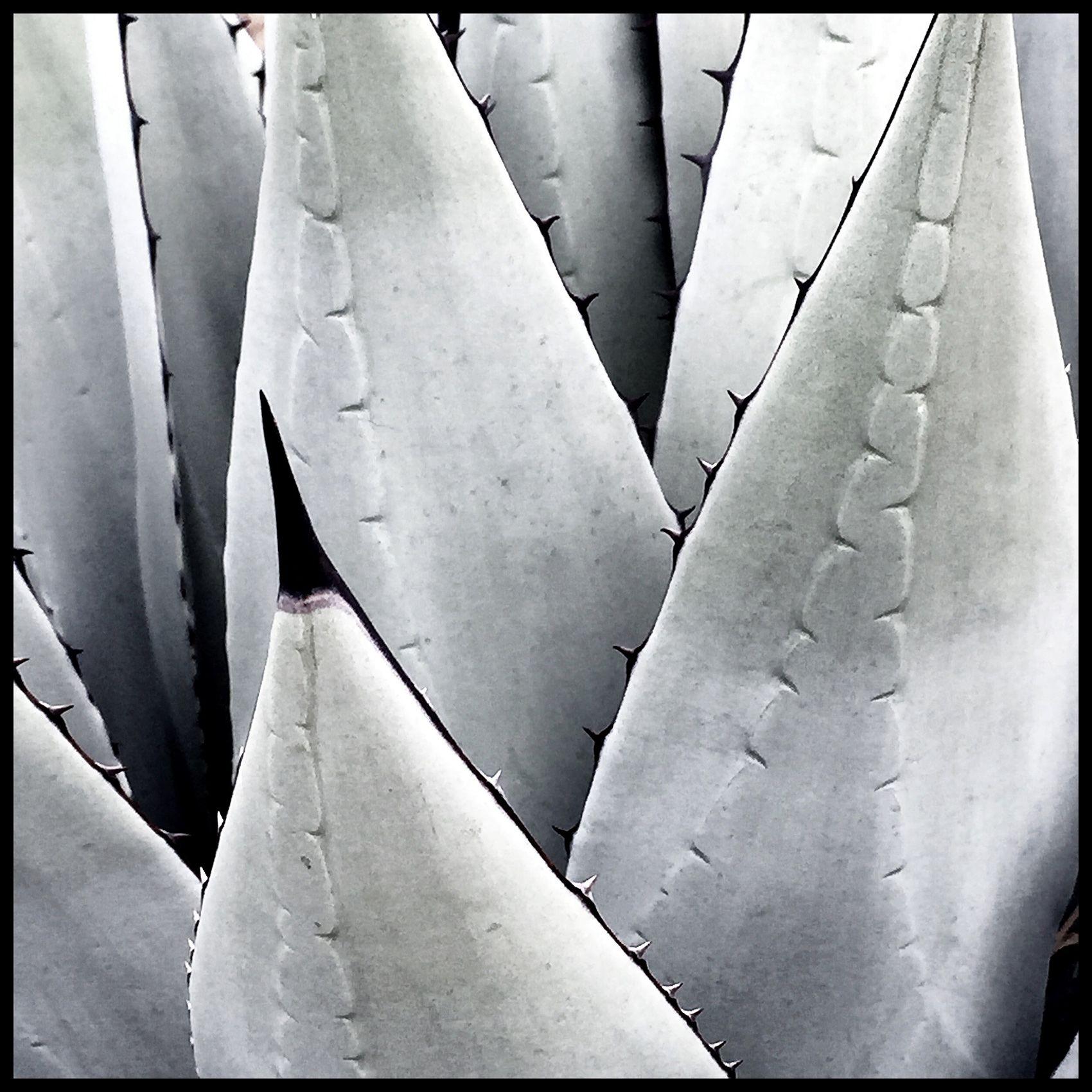 NewMexico_Cactus_Succulents.jpg