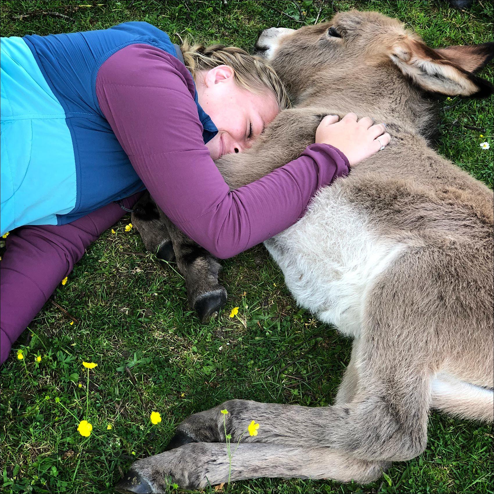 NewForest_Donkey.jpg
